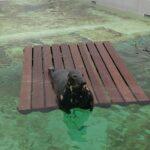 Naar Ecomare (zeehonden zijn altijd leuk)