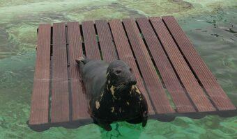 Ecomare - grijze zeehond