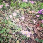 Van ijspret naar lente