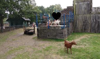 kinderboerderij 2018